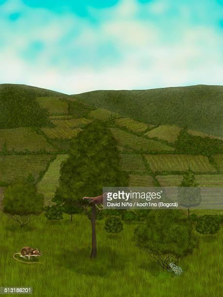 ilustraciones, imágenes clip art, dibujos animados e iconos de stock de cundinamarca plains - biodiversidad