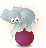 cute but nervous elephant