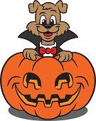 Cute Dog In A Vampire Costume With Pumpkin