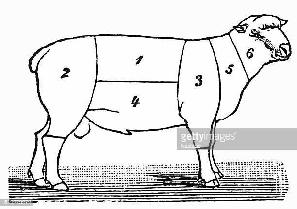 cuts of lamb or mutton diagram - shank stock illustrations, clip art, cartoons, & icons