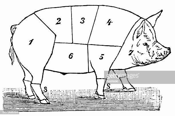 butcher u0026 39 s shop stock illustrations and cartoons