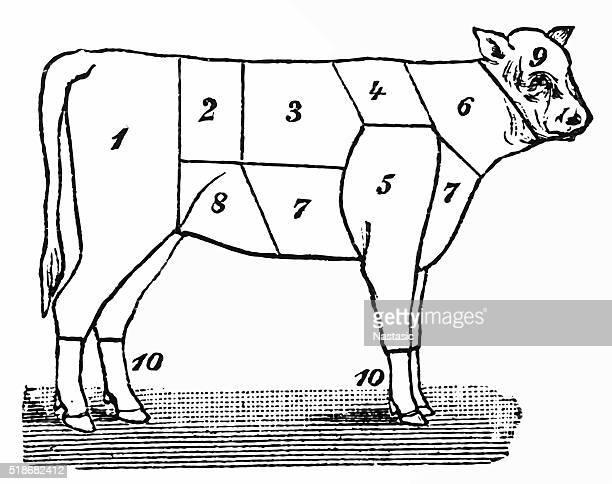 cuts of veal - sirloin steak stock illustrations, clip art, cartoons, & icons