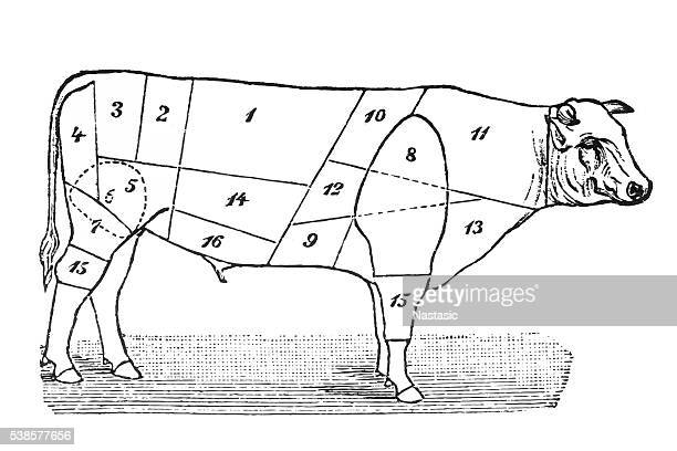 cuts of veal - t bone steak stock illustrations, clip art, cartoons, & icons