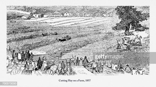 cutting hay on a farm, early americans engraving, 1857 - paddock stock illustrations, clip art, cartoons, & icons