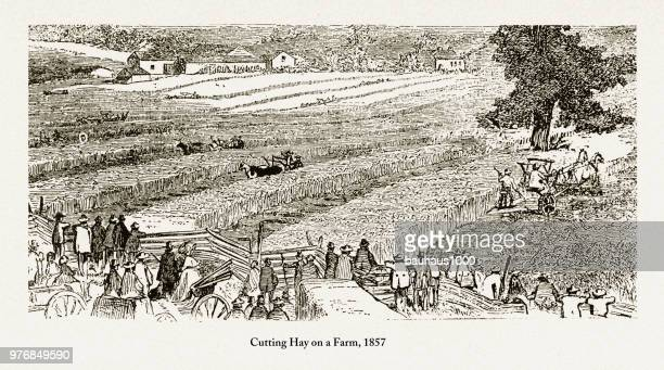 cutting hay on a farm, early americans engraving, 1857 - prairie stock illustrations, clip art, cartoons, & icons