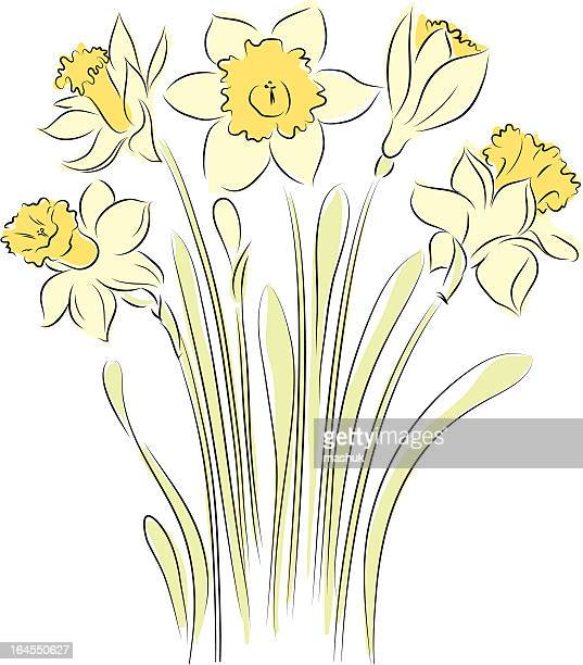 daffodil - paperwhite narcissus stock illustrations, clip art, cartoons, & icons