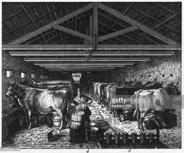 dairy cattle engraving - milking stock illustrations, clip art, cartoons, & icons