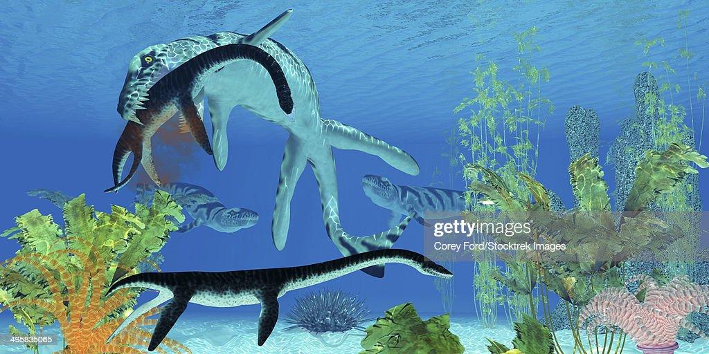 A Dakosaurus attacks a small Plesiosaurus in the clear waters of a prehistoric ocean. : Ilustración de stock