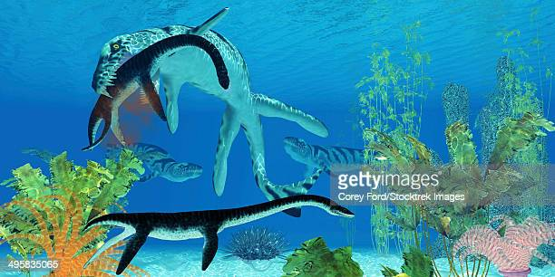 ilustraciones, imágenes clip art, dibujos animados e iconos de stock de a dakosaurus attacks a small plesiosaurus in the clear waters of a prehistoric ocean. - monstruo del lago ness