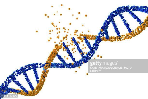 dna damage, illustration - genetic modification stock illustrations