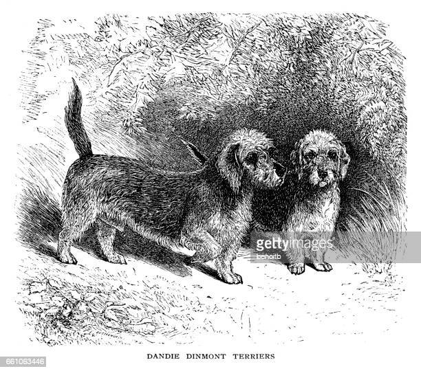 illustrations, cliparts, dessins animés et icônes de dandie dinmont terrier - dandie dinmont terrier