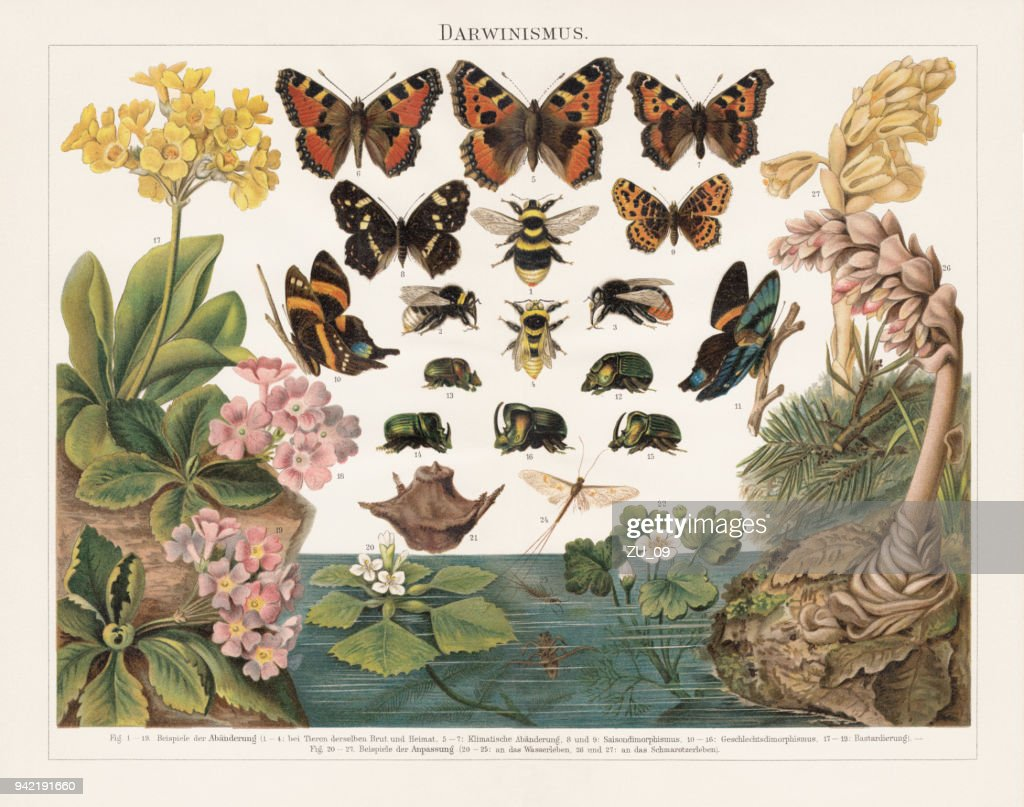 Darwinism, Natural Selection of Living Organisms, lithograph, published in 1897 : stock illustration