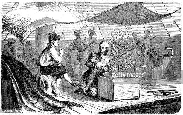 de clie on voyages to martinique with coffee plants - martinique stock illustrations