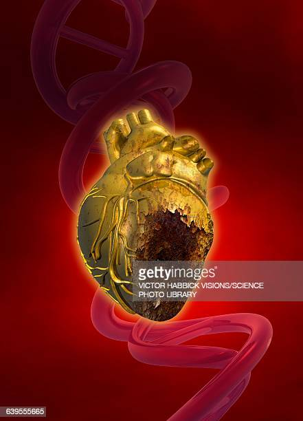 decaying heart, illustration - rotting stock illustrations, clip art, cartoons, & icons