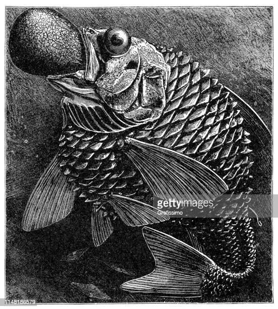deep sea fish illustration 1890 - ugliness stock illustrations, clip art, cartoons, & icons