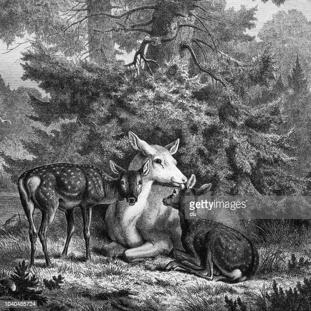 deer family in the forest - young animal stock illustrations, clip art, cartoons, & icons