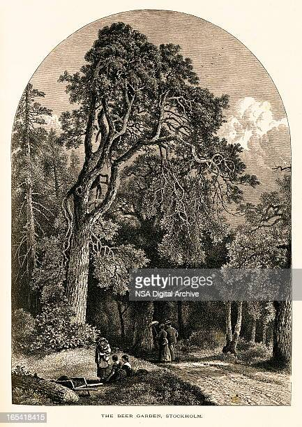deer garden, sweden (antique wood engraving) - kong: skull island stock illustrations