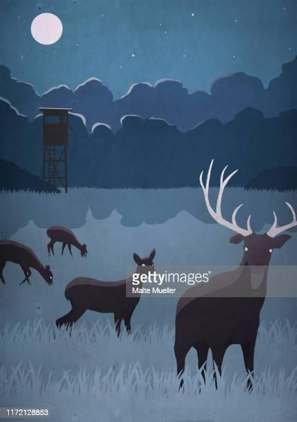 deer grazing in field on full moon night - wildlife stock illustrations