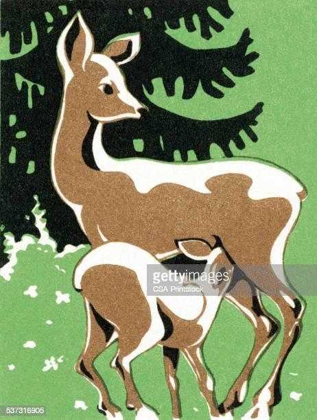 illustrations, cliparts, dessins animés et icônes de deer - biche