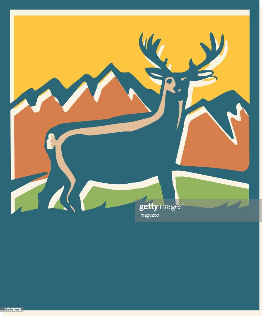 deer : Illustration