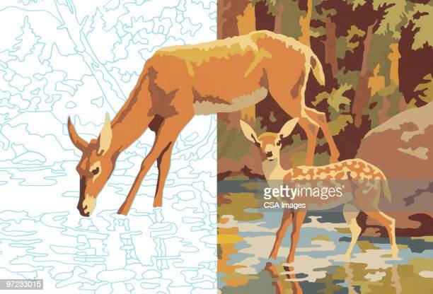 deer - young animal stock illustrations, clip art, cartoons, & icons