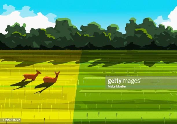 deer relaxing in sunny rural field - tranquil scene stock illustrations