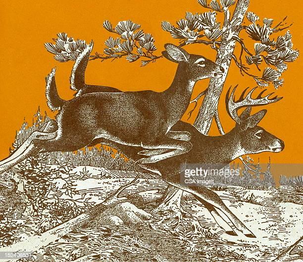 Deer のランニング