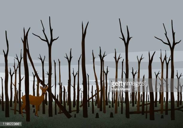 ilustrações de stock, clip art, desenhos animados e ícones de deer standing among burned trees in woods after forest fire - desmatamento