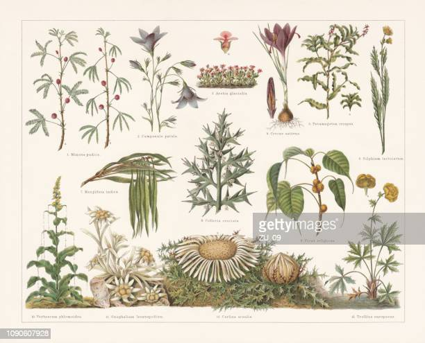 Defence mechanisms of different plants, chromolithograph, published in 1897