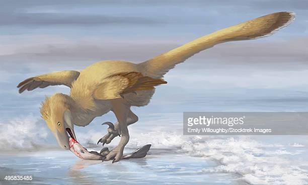 deinonychus antirrhopus preys on a fish. - dromaeosauridae stock illustrations