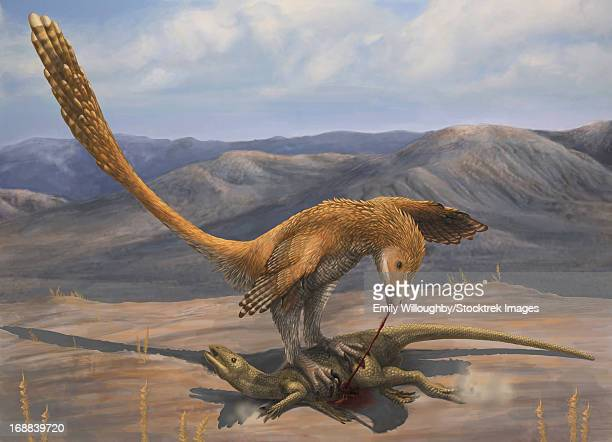 a deinonychus feeds on the carcass of zephyrosaurus, a small cretaceous ornithopod. - talon stock illustrations