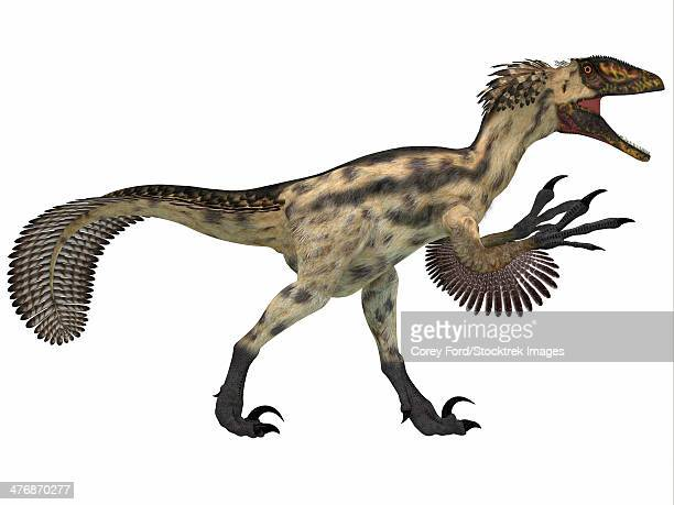 ilustraciones, imágenes clip art, dibujos animados e iconos de stock de deinonychus is a carnivorous dinosaur from the early cretaceous period. - paleobiología