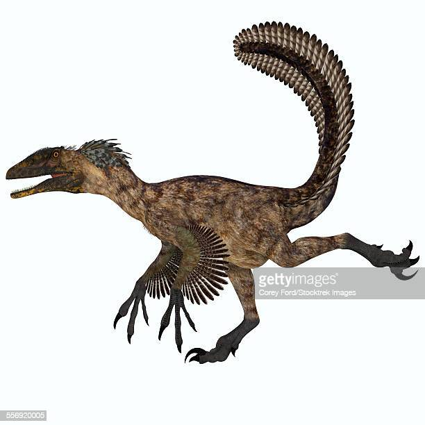 deinonychus was a carnivorous dinosaur that lived during the cretaceous period of north america. - dromaeosauridae stock illustrations