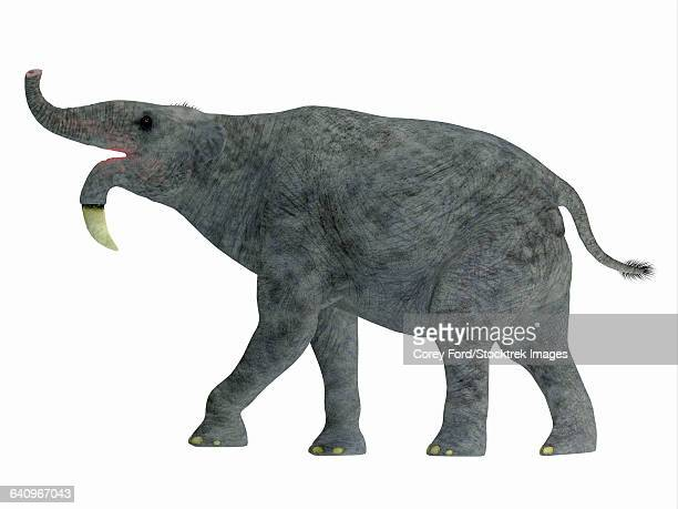 Deinotherium mammal, side view.