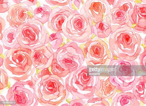 delicate watercolor roses - rosa stock illustrations