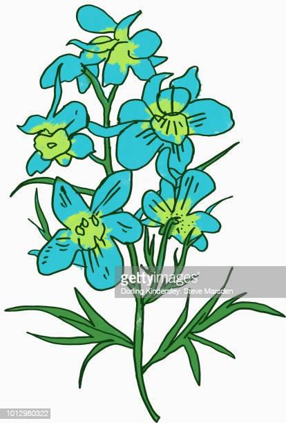 ilustraciones, imágenes clip art, dibujos animados e iconos de stock de delphiniums - ranunculus