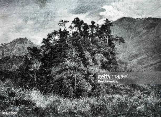 Dense woods in madagascar 1895 'the Earth and her People'