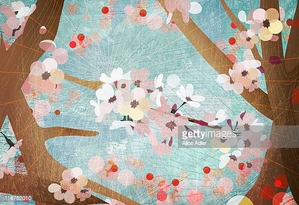 detail of cherry blossoms - growth stock illustrations