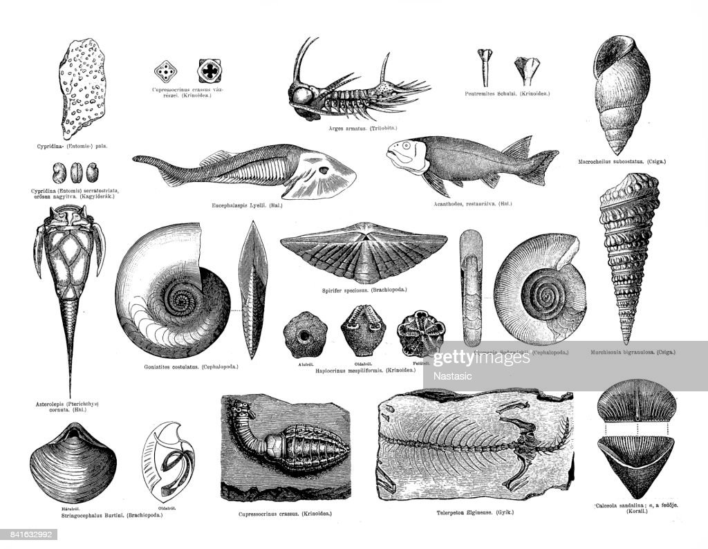 Devonian fossils : stock illustration