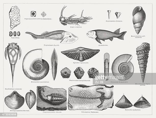 Devonian fossils, wood engravings, published in 1875