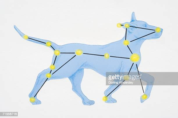 a diagram illustrating the constellation of canis major complete with image of dog. - constellation stock illustrations