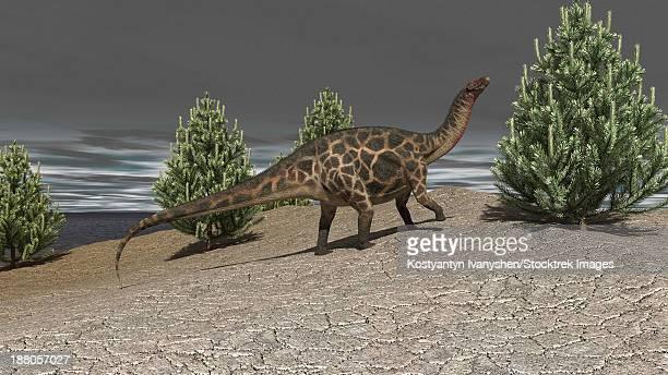 ilustraciones, imágenes clip art, dibujos animados e iconos de stock de dicraeosaurus walking amongst pine trees. - paleozoología
