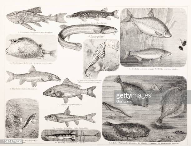 Different fish carp and pike illustration
