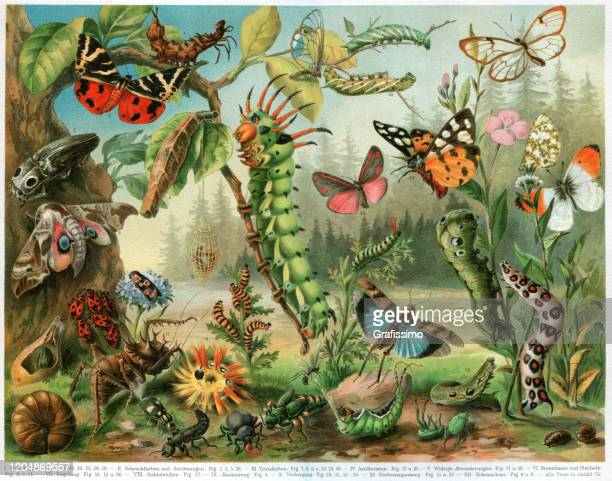 different insects bugs and butterflies from all around the world - graphic print stock illustrations