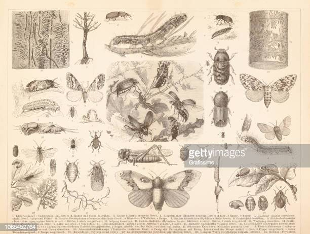 Different insects locust june beetle or Colorado beetle illustration