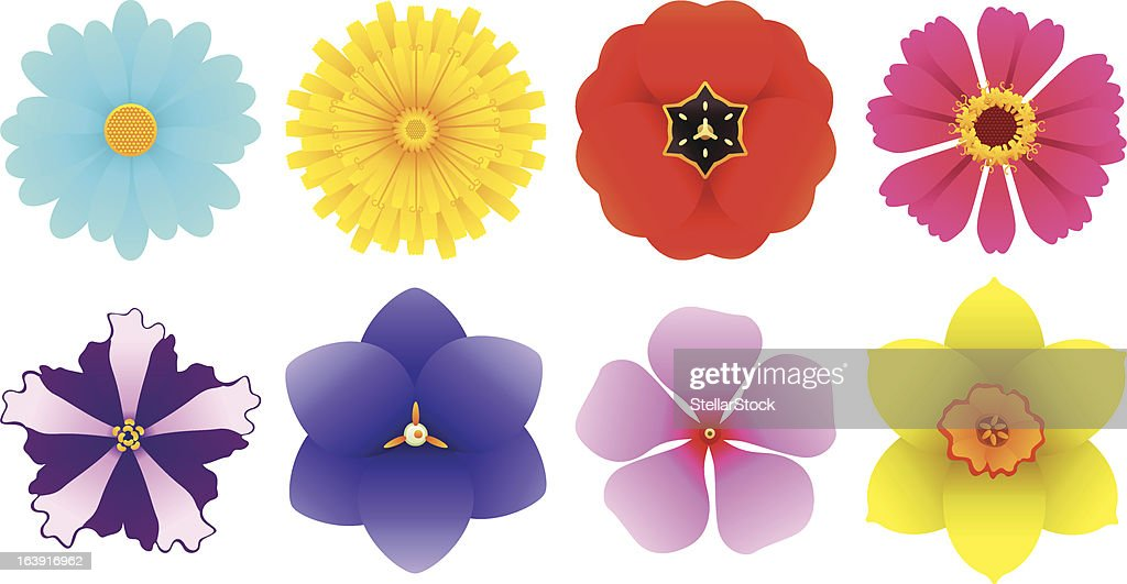 Different Kinds of Flowers - Top View