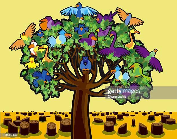 ilustrações de stock, clip art, desenhos animados e ícones de different tropical birds all on one tree surrounded by tree stumps - desmatamento