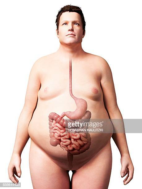 digestive system of obese man - human small intestine stock illustrations