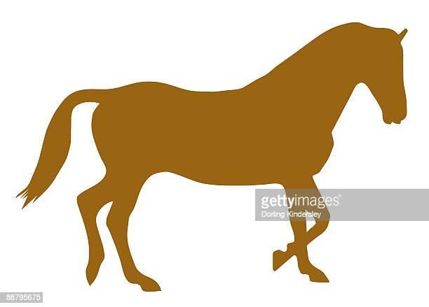 digital illustration of domestic horse (equus ferus caballus) - horse family stock illustrations, clip art, cartoons, & icons