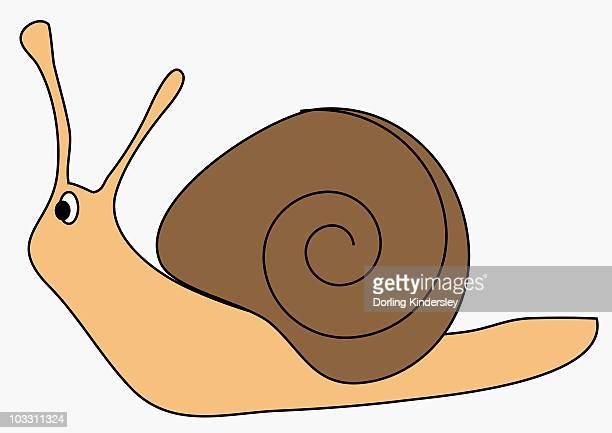ilustrações de stock, clip art, desenhos animados e ícones de digital illustration of garden snail - caracol de jardim